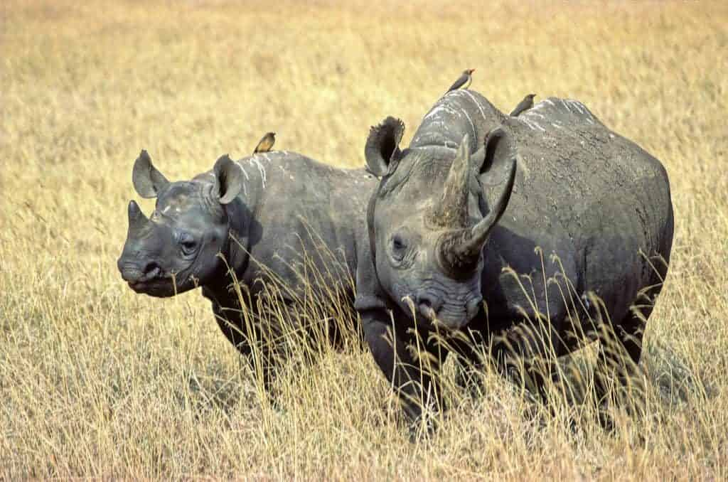 Sustainable Travel And Protecting the Extraordinary Species of Tanzania