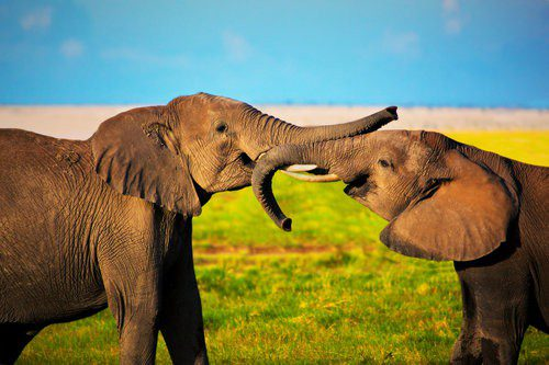 Travel Experiences that will Change Your Life Forever - Above Safaris
