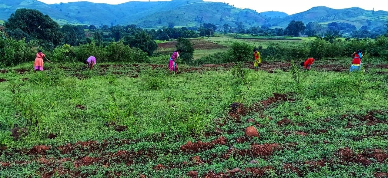 Empowering Tribal Farming Communities through Agroforestry